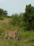 Camping in Kruger National Park